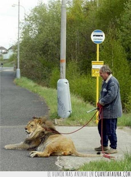 leon,paseo,perro,vagabundo