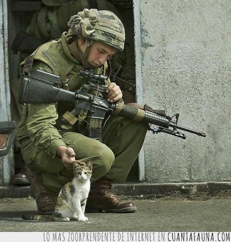 gato,guerra,soldado
