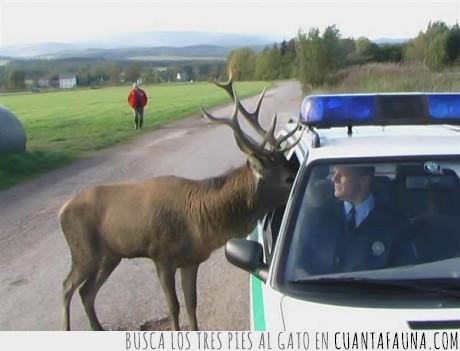 papa noel,policía,reno