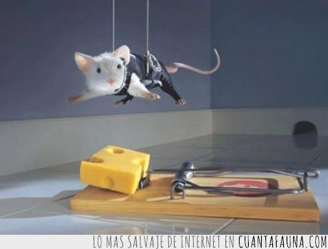 experto,ninja,queso,raton