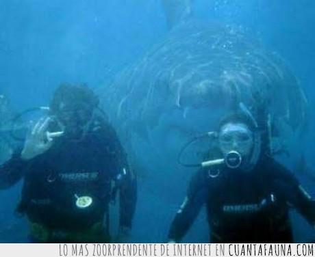 buceo,muerte,peligro,tiburón