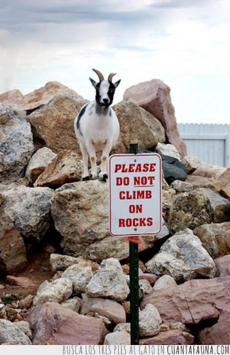 cabra,cartel,roca,señal