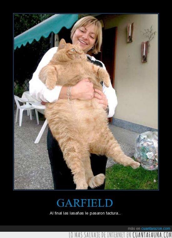 garfield,gato,gordo,lasaña,obeso,peso
