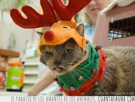 disfraz,fail,gatos,lol,navidad