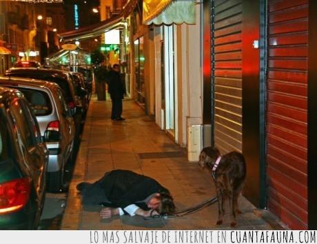 borracho,perro