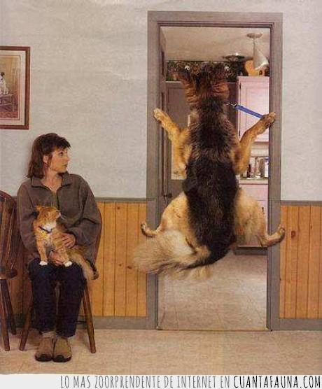 entrar,perro,sala,veterinario