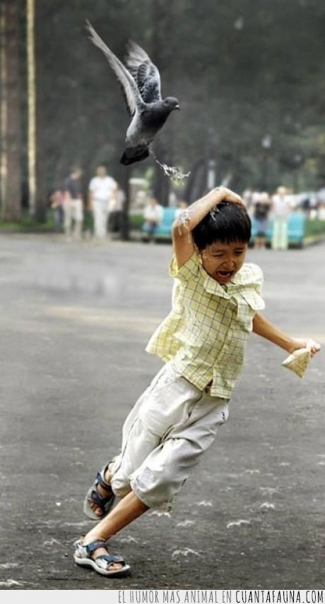 caca,niño,paloma