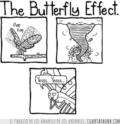efecto,mariposa,temedlas
