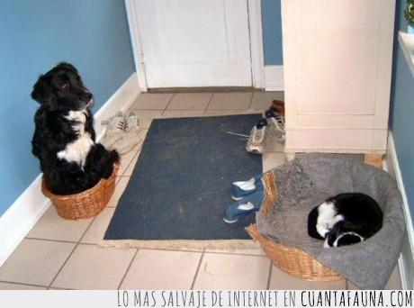 descansar,gato,perro