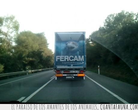 camión,fercam,publicidad,tiburón