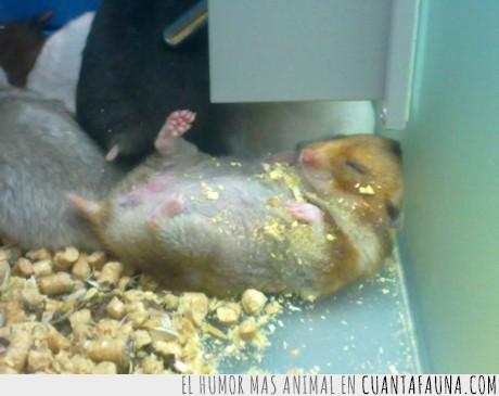(está vivo),comida,empacho,ratón,repantigado
