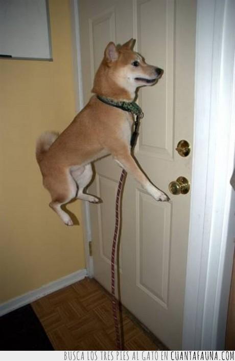 levitacion,perro,puerta