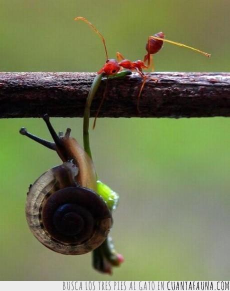 Animales,Atómica,Caracol,Hormiga,Naturaleza