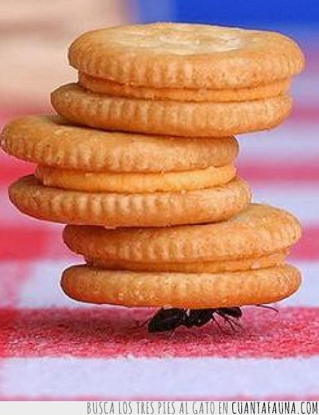 cartel,fuerza,galletas,hormiga,insecto,invierno