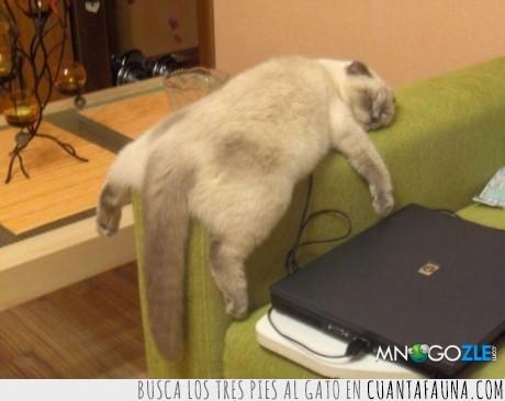 gato,ordenador,sofa,verano