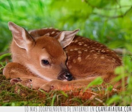 animal,bambi,bosque,ciervo,crias,naturaleza