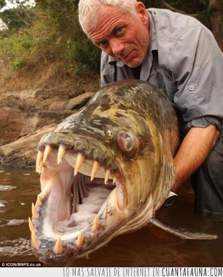 cocodrilo,peligroso,pez