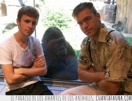 cachondo,gente,Gorila,risa