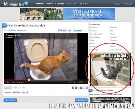 adiestrar,anuncio,baño,Gato,notengotele,WC