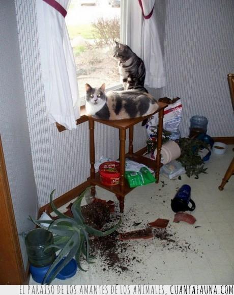 disimular,gatos