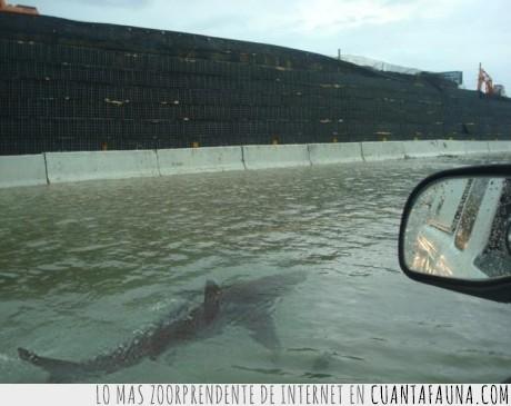 agua,huracán,lol,tiburón