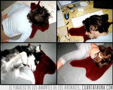Cojin,Dormir,Perro,Sangre