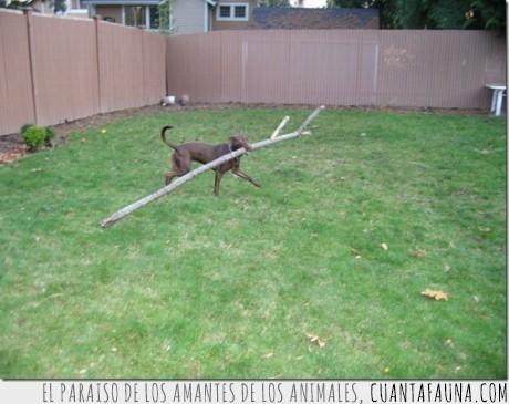 palito,perro,tronco,vasco