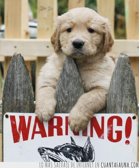 cachorro,perro,warning