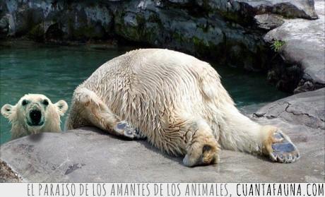 animal,cabeza,cortada,frío,oso,polar