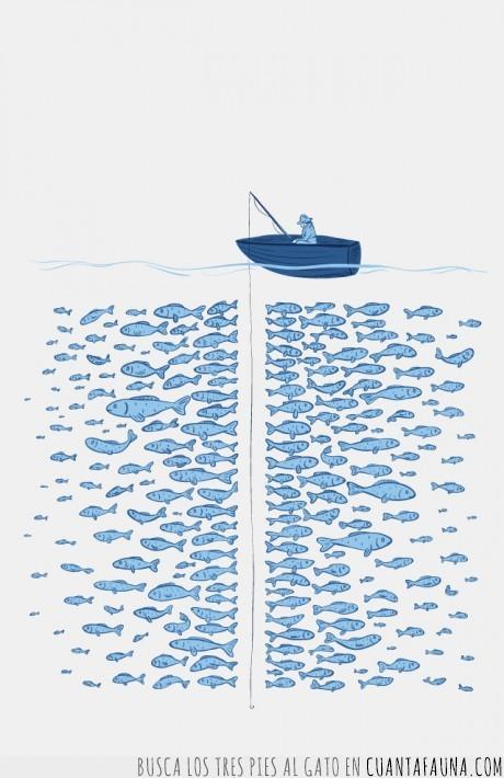 caña,mar,pesca,pescado,pez