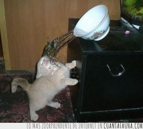 agua,fail,foto,gatito