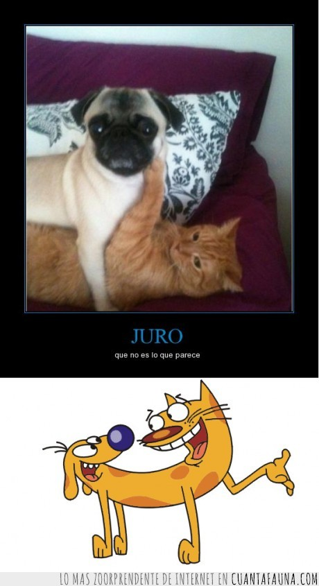 catdog,gato,gatoperro,mestizo,perro,tras tras