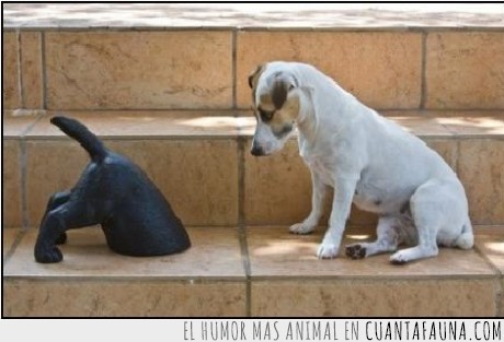 dentro,escalera,estatua,mirar,perro