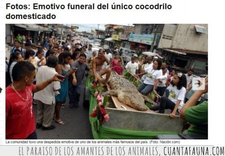 cocodrilo,domesticado,funeral