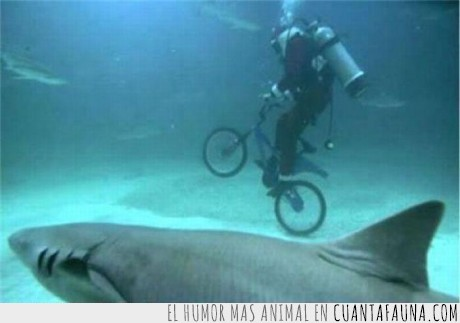 bicicleta,buceo,moda,nueva,tiburon,underwaterbiking