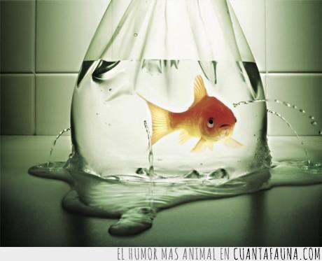 agua,bolsa,juego,pez,terror