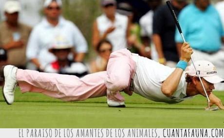 araña,golfista,postura,spiderman