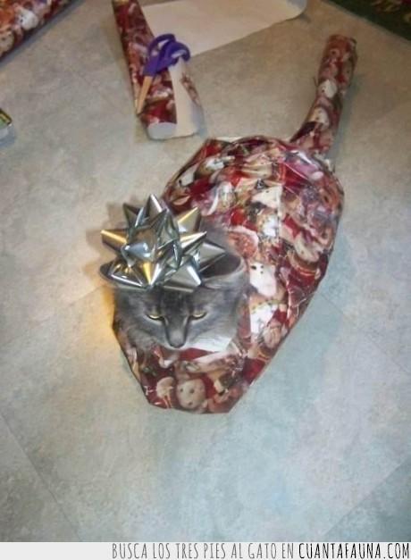 cumpleaños,gato,idiota,navidad,regalo,sarcasmo