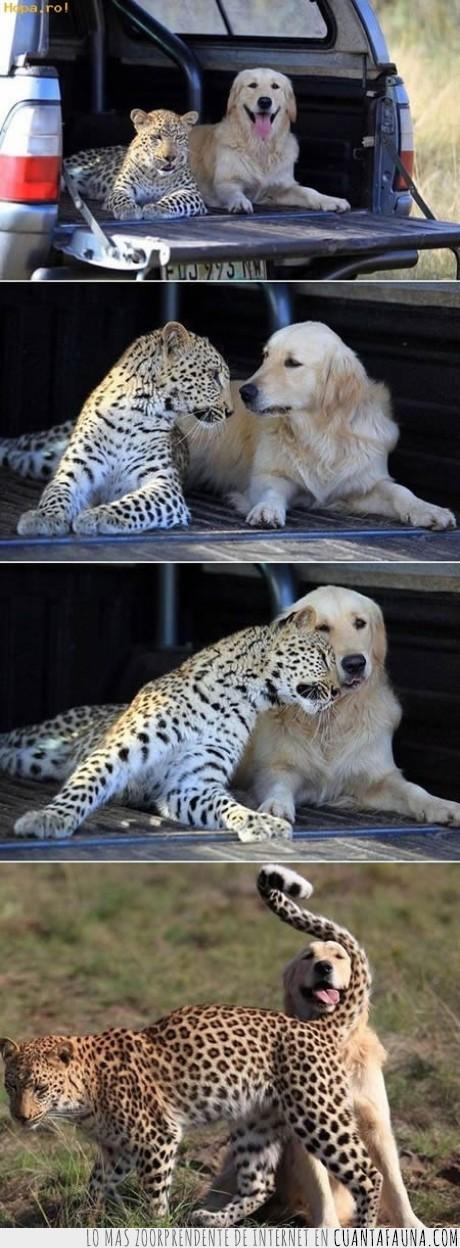 amistad,animales,guepardo,leopardo,perro