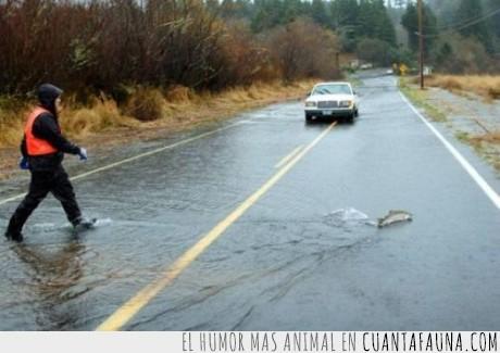 agua,carretera,pez