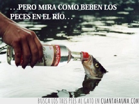 agua,beber,pez,villancico,vodka