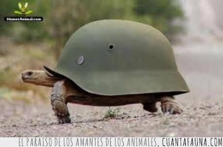caparazón,guerra,militar,tortuga