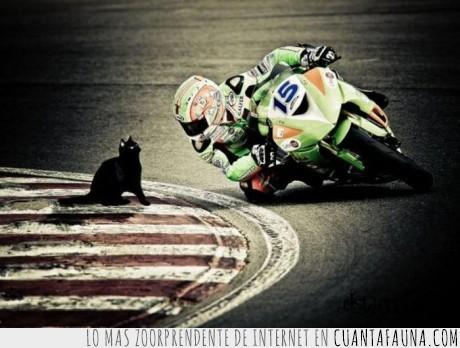 curva,gato,moto,saludar