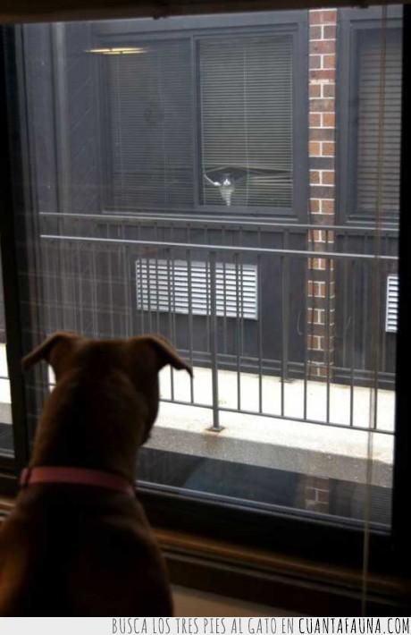 gato,miedo,ninja,peligro,perro,ventana,vigilar