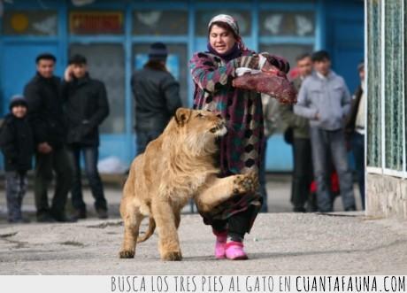 asaltantes,león,mascotas