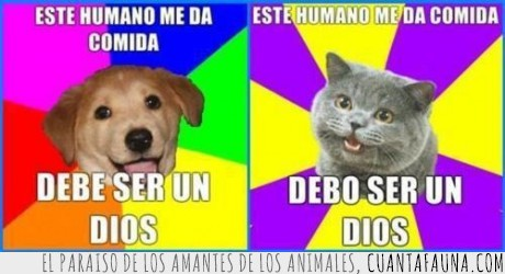 amo,comida,dios,dueño,gato,perro