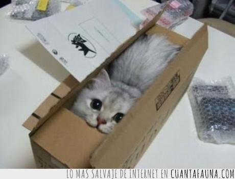 caja,enviar,gato,mensajería
