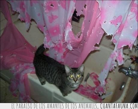 agua,arañazos,bañar,cortinas,ducha,fail,gato,romper,uñas