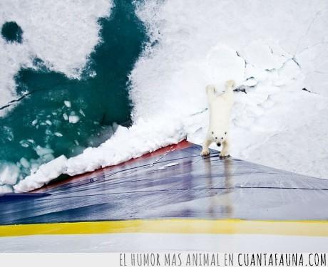 barco,hielo,oso,oso polar,polo