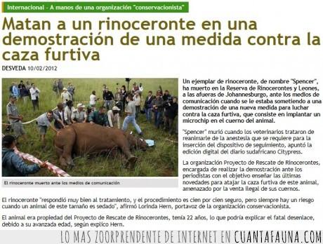 caza,conservacion,especie,extincion,furtiva,ironia,rinoceronte
